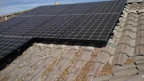 Pigeons nesting under solar panels