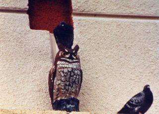 res3-owl-1-320x230
